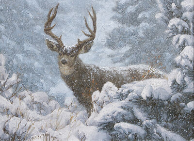 Greg Beecham, 'Untitled - Mule Deer', 1994