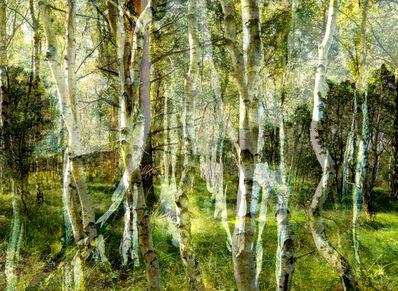 Anett Stuth, 'Birkenhain', 2014