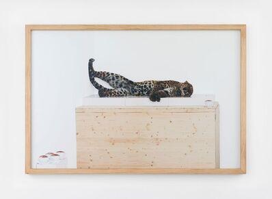 Paola Pivi, 'Untitled (leopard)', 2007