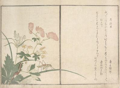 Kitagawa Utamaro, 'Katydid and Centipede', 1788