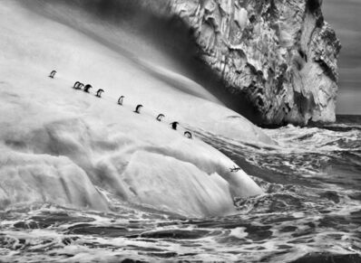 Sebastião Salgado, 'Chinstrap penguins on an iceberg, between Zavodovski and Visokoi island. South Sandwich Islands.', 2009