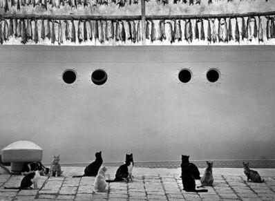 Pentti Sammallahti, 'Islanti, Iceland (Cats, Fish on Ship)', 1980