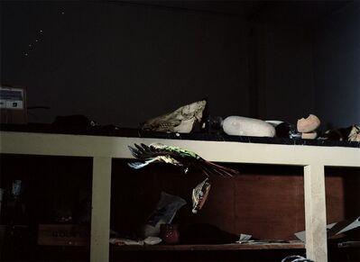 João Maria Gusmão & Pedro Paiva, 'Tortoise and strange parrot', 2011