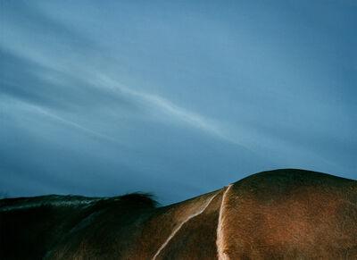 Leon Steele, 'Pelage Ridgeway', 2002