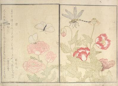 Kitagawa Utamaro, 'Butterfly and Dragonfly ', 1788