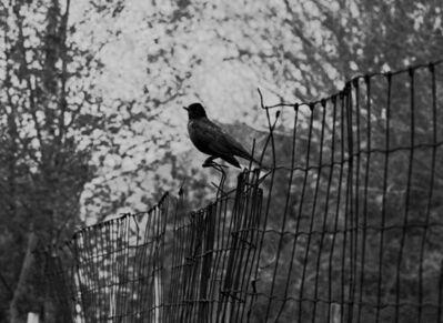 Mark Steinmetz, 'Chicago (Robin)', 1989