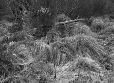 Amelia Stein, 'Glenamoy Forest 1', 2021
