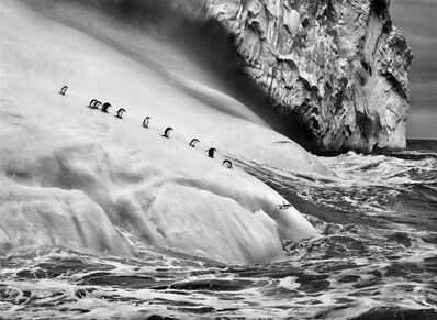 Sebastião Salgado, 'Chinstrap penguins dive off icebergs located between Zavodovski and Visokoi islands in the South Sandwich Islands', 2009