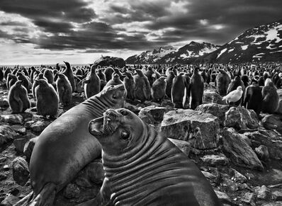 Sebastião Salgado, 'Southern Elephant Seal Calves, Saint Andrew's Bay, South Georgia, 2009', 2009