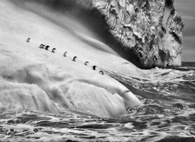 Sebastião Salgado, 'Chinstrap penguins on an iceberg, between Zavodovski and Visokoi islands, South Sandwich Islands', 2009