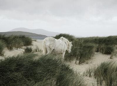 Richard Gaston, 'Harris Horse ', 2017