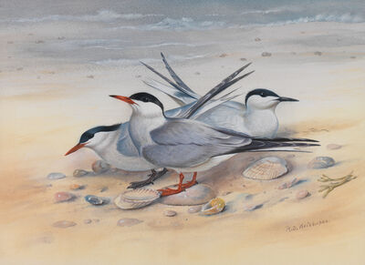David Kristupas, 'Three Shore Birds Shells', Active Contemporary