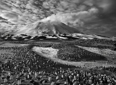 Sebastião Salgado, 'Chinstrap Penguins on Zavodovski Island, South Sandwich Islands', 2009