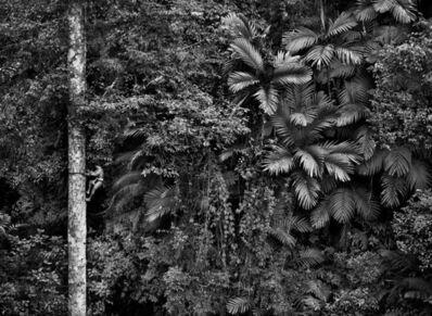 Sebastião Salgado, 'Mentawai climbing a gigantic tree to collect durian fruit. Siberut Island. West Sumatra. Indonesia.', 2008