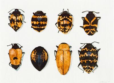 Walter Oltmann, 'Beetles'