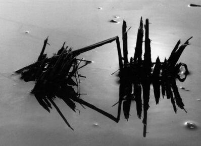 Lucien Clergue, 'Riz en hiver, Camargue', 1960