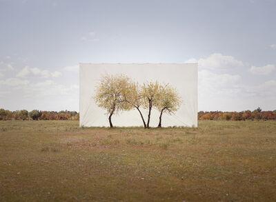 Myoung Ho Lee, 'Tree…#4', 2013