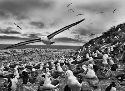 Sebastião Salgado, 'Jason Islands, Falkland Islands', 2009