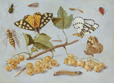 Jan van Kessel II, 'Study of Butterfly and Insects', ca. 1655