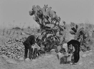 Samah Shihadi, 'Cactus Harvest #1', 2017