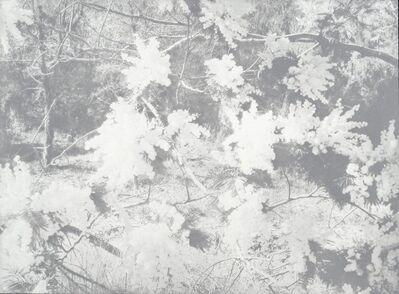 Adrian Schiess, 'Mimosas II', 2016