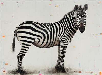 David Morago, 'Cebra', 2020