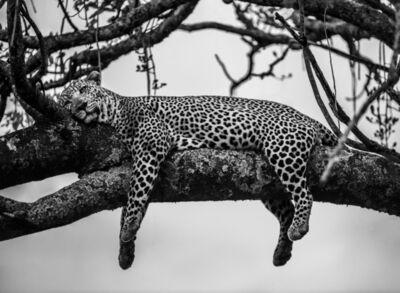 James Lewin, 'A Leopard's Dream, Maasai Mara, Kenya', 2020