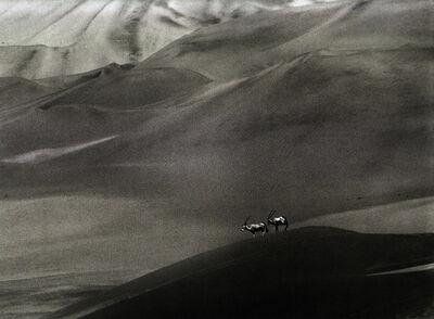 Sebastião Salgado, 'Orix - Namibia', 2005