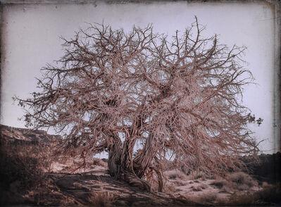 Kate Breakey, 'Juniper Tree, Monument Valley, Utah   '