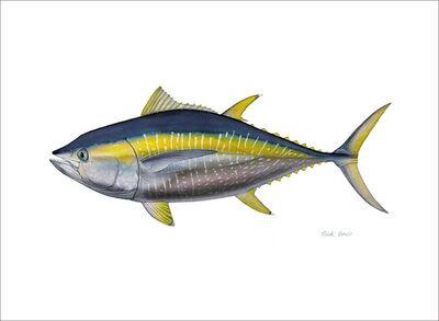 Flick Ford, 'Yellowfin Tuna', 2016