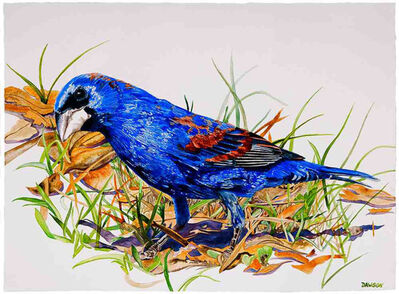 Carol Dawson, 'Prowling Blue Grosbeak', 2018