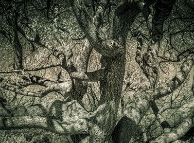 Bob Petersen, 'Weeping Cherry Texture', 2019