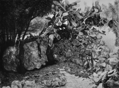 Samah Shihadi, 'Nature #1', 2017