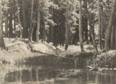Ansel Adams, 'A Grove of Tamarack Pine', circa 1921
