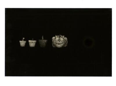 Yamamoto Masao, 'Kawa = Flow #280', 1994