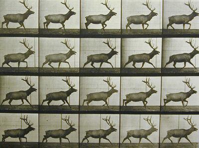 Eadweard Muybridge, 'Plate 692. Elk trotting.', 1887