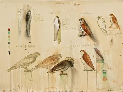 Jane Rosen, 'QUAIL HAWK STUDY', 2011