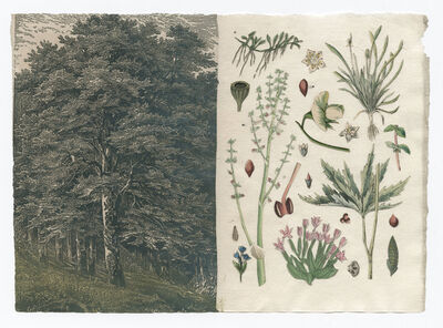 Billy Renkl, 'A Walk In The Woods #10', 2011