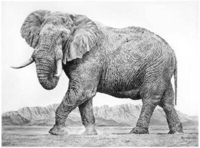 Rick Shaefer, 'Elephant II', 2016