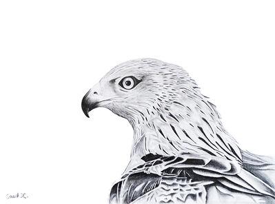 David Da Costa, 'The hawk', 2020