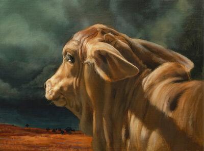 Teresa Elliott, 'Brahman Calf', 2019
