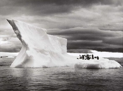 Sebastião Salgado, 'Antarctica', 2005