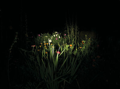 Cristina Fontsare, 'Night Garden', 2006