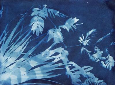 Allison Svoboda, 'Cyano 25/82-3'