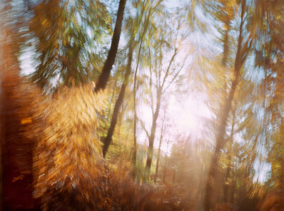 Dominic Pote, 'The Ornamental Drive', 2010