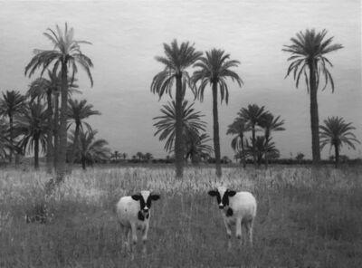 Pentti Sammallahti, 'Babil, Iraq', 2004