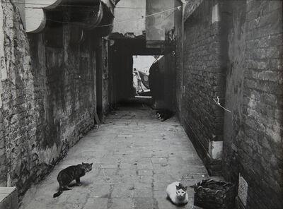 Agnès Varda, '3 chats, Venise', 1959