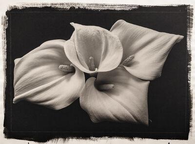Kenro Izu, 'Still Life 181', 1992