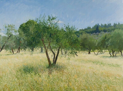 Marc Dalessio, 'Olive Trees in the Sun', 2019