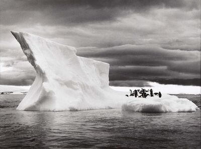 Sebastião Salgado, 'The Penguins of Paulet Island Resting on an Iceberg, Antarctica', 2005